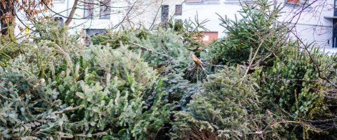 weihnachtsbaum entsorgen so werden sie ihn los. Black Bedroom Furniture Sets. Home Design Ideas