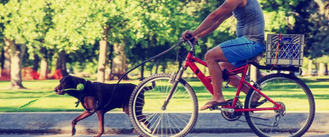 fahrradfahren mit hund so sind sie sicher unterwegs. Black Bedroom Furniture Sets. Home Design Ideas