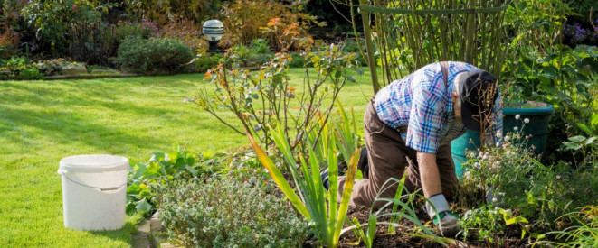 Lieblings Gartenpflege: Was Mieter übernehmen müssen @OE_82