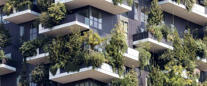 Baum Auf Balkon Was Das Mietrecht Zu Balkonpflanzen Sagt
