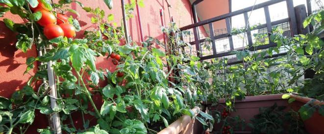 Urban Farming: Was ist für Mieter erlaubt?