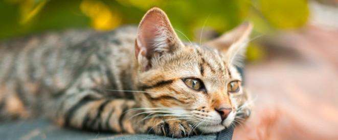 Katze Zugelaufen Das Fundtier Unbedingt Melden