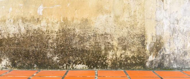 Feuchte Wande Im Keller Grund Fur Eine Mietminderung