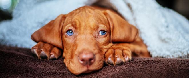 Vermieter Verbietet Hund Gericht Gibt Mietern Recht
