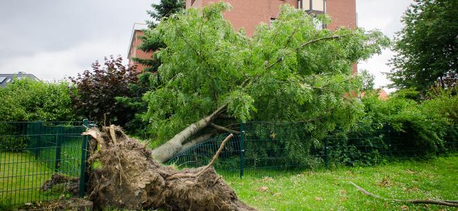 Sturmschäden im Garten